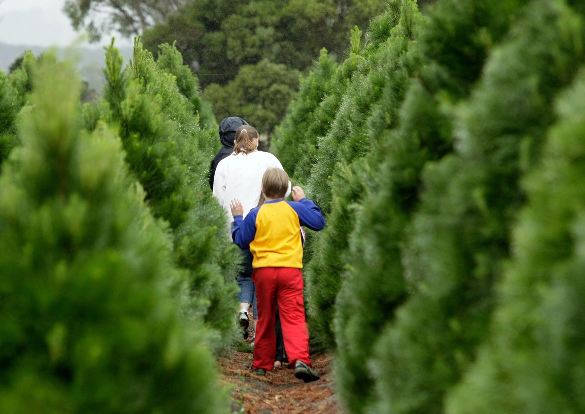 Photo Gallery - Nieman Christmas Tree Farm, Lexington, KY