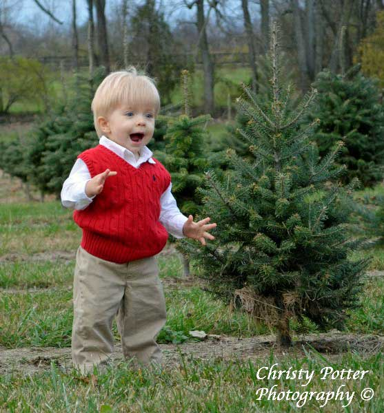 Contact Us - Nieman Christmas Tree Farm, Lexington, KY Lexington, KY