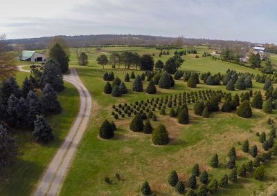 Nieman-Tree-Farm-Aerial