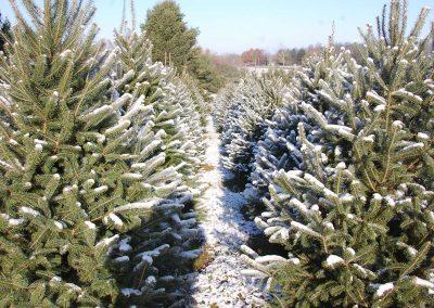 Ky Christmas Tree Farm, Lexington, KY